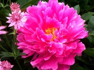 Peony Pegge Erkeneff Your Spiritual Garden Tending to the Presence of God